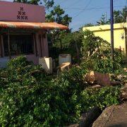 Lluvias crean inundaciones y derriban árboles en barrios